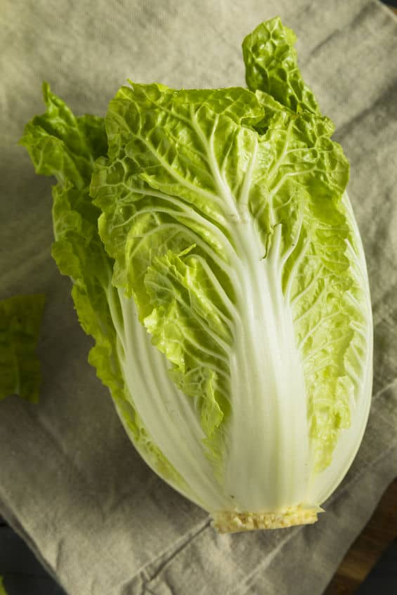 Top view of one Napa Cabbage head on a grey background